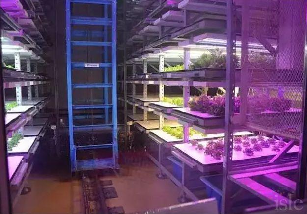 在中国led植物照明发展及挑战